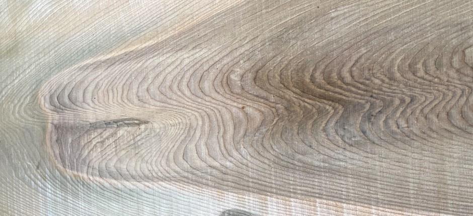 Gemeine Esche © Ernst Frühmann